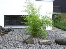 bambusz1